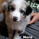 Nora20180525_044933